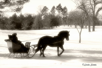 one-horse-sleigh-37976_staats1