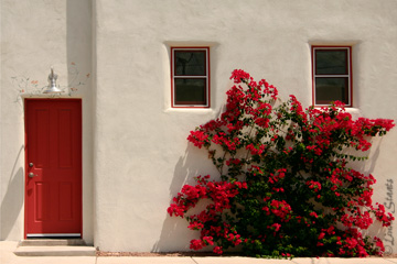 bougainvillea-red-white_staats