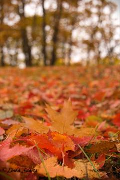 Autumn carpet 51484_Staats
