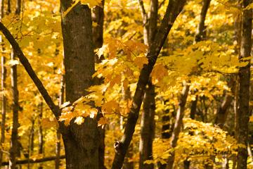 Golden fall_Staats