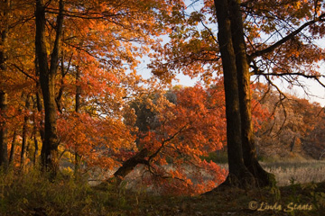 Fall at Carlos Avery WMA 51522_Staats