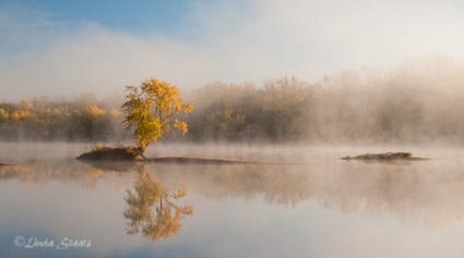 Single tree island,early autumn 63751_Staats