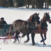 A winter's sleigh ride