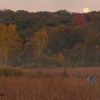 Moonset over the autumn prairie