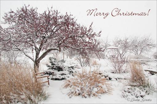 Winter in the garden 70448_Staats