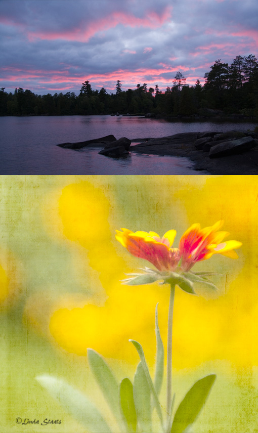 My Midwest,Florabundant_Staats