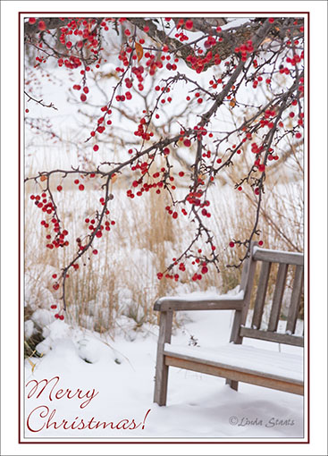 Winter cranberry tree 4291_Staats