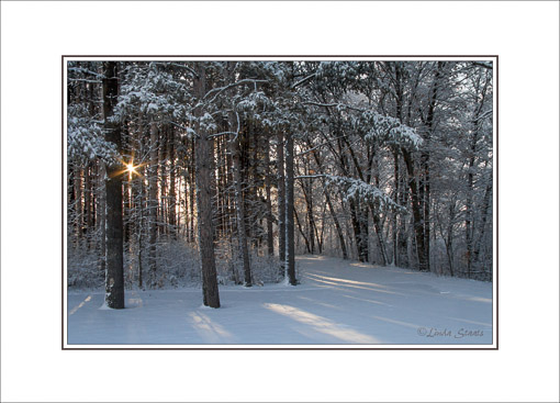 Winter daybreak through the trees_Staats