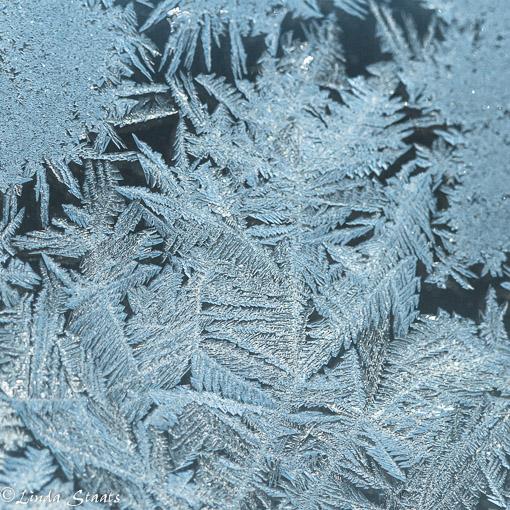Blue window frost_Staats
