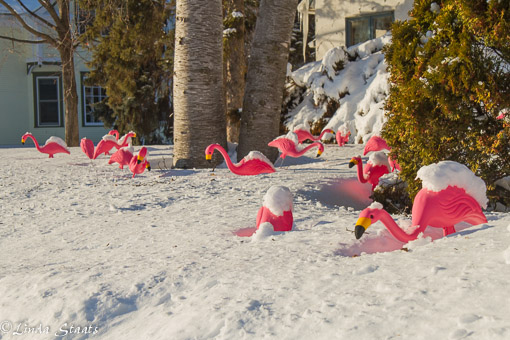 Flamingos in the snow_Staats