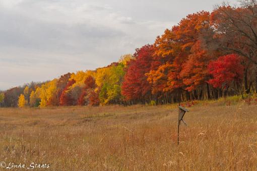 Fall treeline 7408_Staats