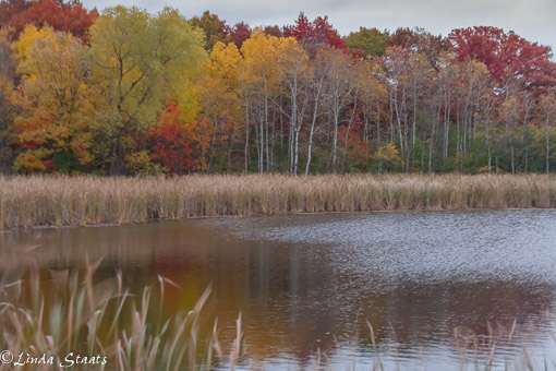 Wind and fall color_Staats 7154