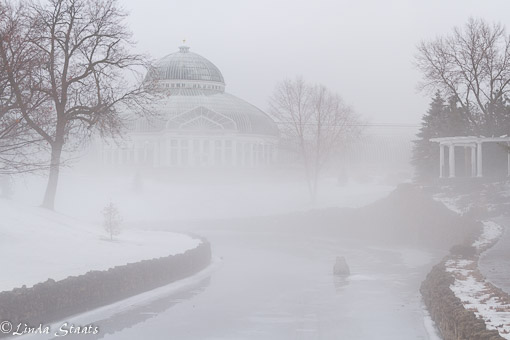 Fog in the morning McNelly Conservatory 7917_Staats