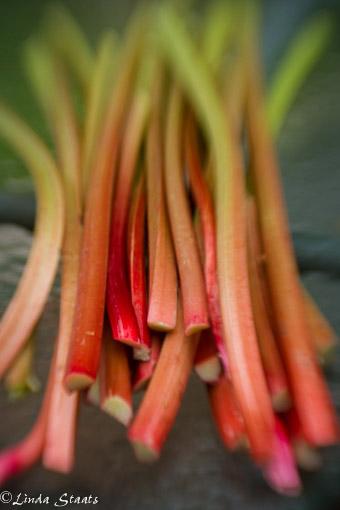 Fresh rhubarb_Staats 9790