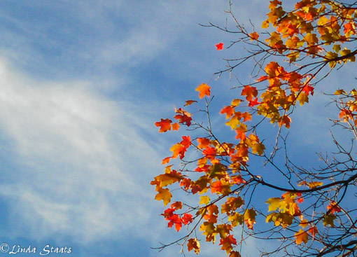 Fall in the air 20150909_185659 Staats