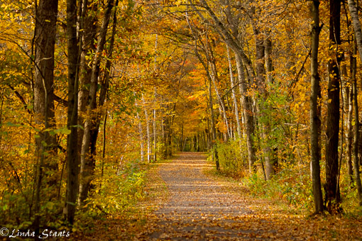 Fall path Wild River State Park 11214 _Staats