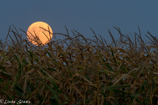 Full moonrise 10917_Staats