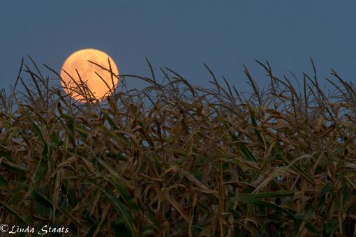 Full moonrise 10917_Staats