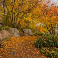 Fall colors in the Ordway Japanese Garden