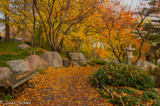 Ordway Japanese garden fall 11379_Staats