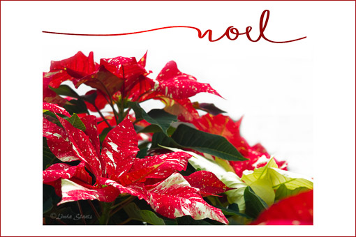 Christmas Noel_Staats