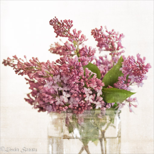 Lilacs 12914_Staats