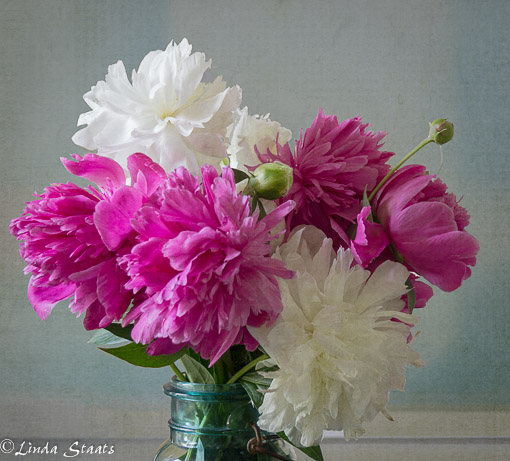 White and pink peonies 13429_Staats