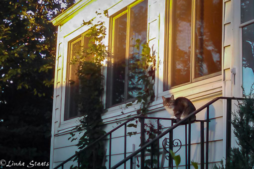 Cat in the morning_062146_627_Staats