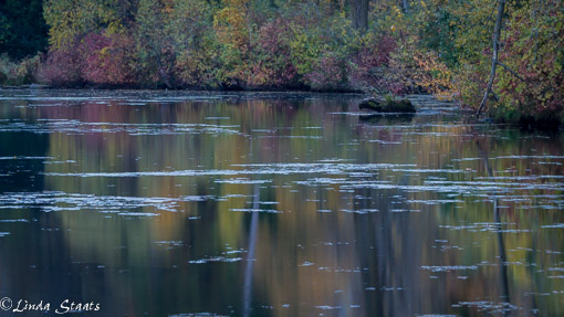 fall-color-reflection-14359_staats