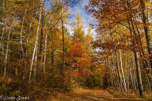fall-colors-of-the-north-woods-14278_staats