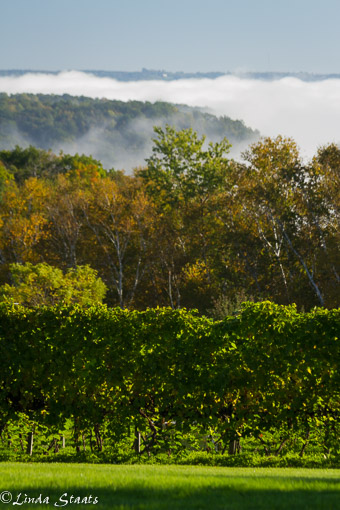 fog-and-fall-color-ms-river-bluffs_14225-staats