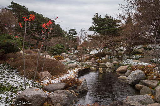 winters-arrival-ordway-japanes-garden_14930-staats