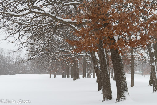 cold-in-the-woods-15405_staat
