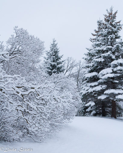 morning-blanket-of-snow_staats15156