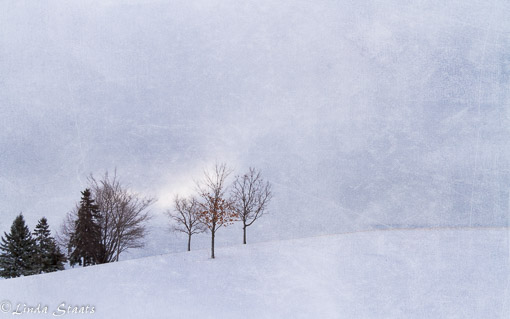winter-trees-on-the-hill-7d15809_staats