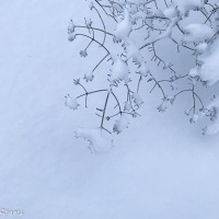 Three opportunities to shovel snow