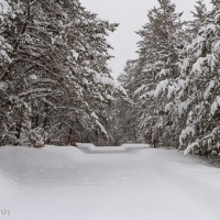 A snowshoe hike in the woods
