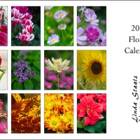 2020 Desk calendar collection