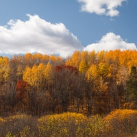 The fleeting colors of fall